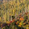 """Autumn colours, Hunza valley """"Pakistan""""  ألوان الخريف بوادي هنزه  ,, شمال باكستان"""