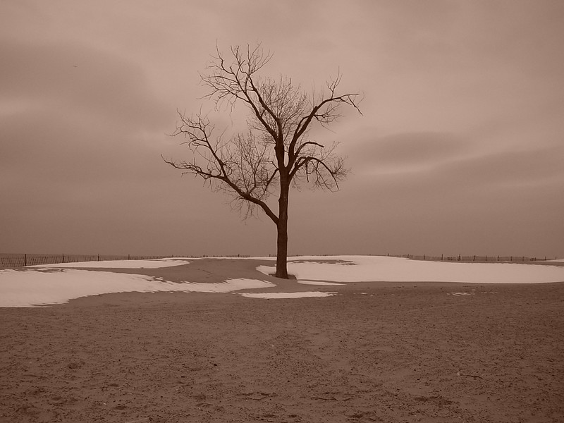 Lake Mich Tree 02 (sepia)