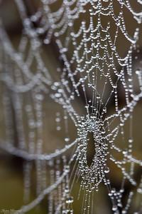 Spindelväv i dimma