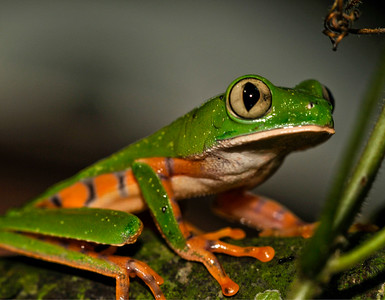 _DSC8488_monkeyfrog_crop