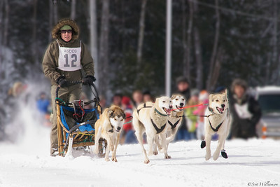 Mushing the Dogs