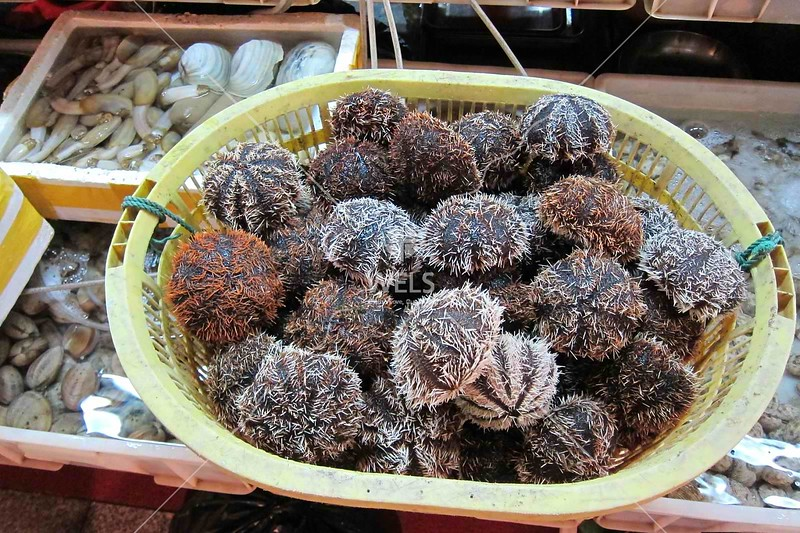 Sea urchins by the basket, Sanya, Hainan China by kstellick