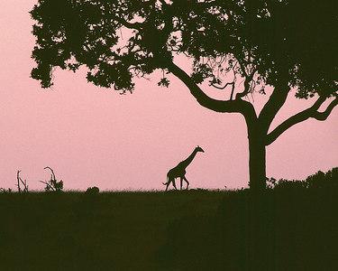 giraffe silhouette adj1 printed cropped 8x10