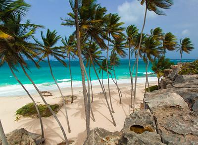 Barbados Palms