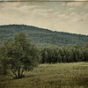 """Treescape - Southern Virginia"", USA"