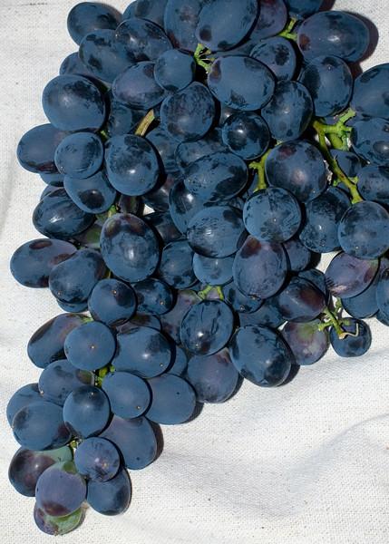 Grapes from our backyard.  Thanks Neighbors!<br /> Santa Clara, California<br /> July 30, 2009