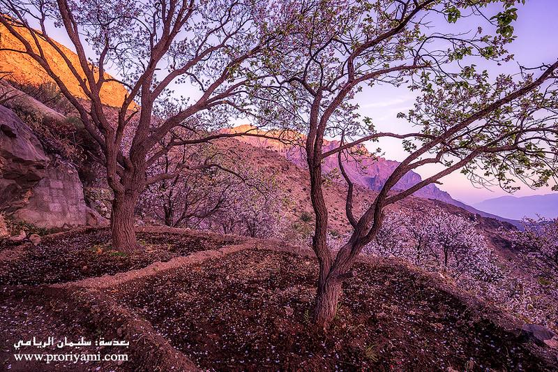 Spring of Wakan, Oman.