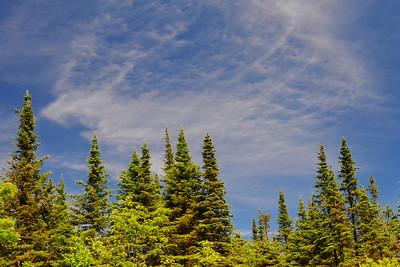 Trees & Blue Sky