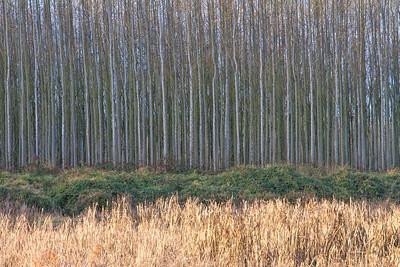 Engineered Forest