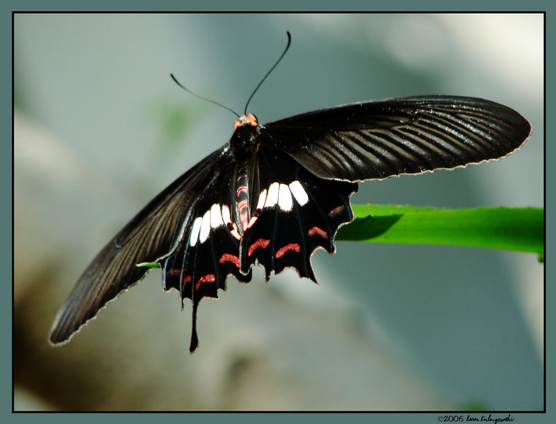 Butterfly4s