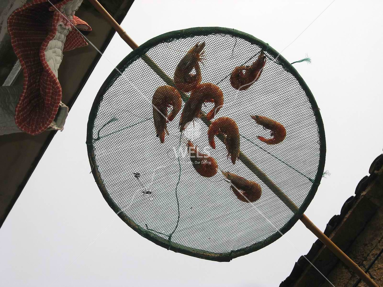 Drying prawns SE coast of China by kstellick