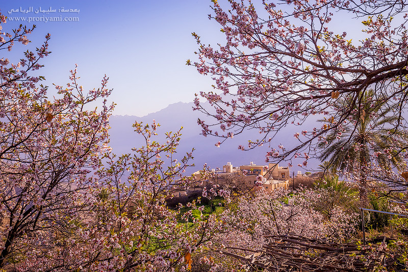 "Spring of village of wakan ""oman."