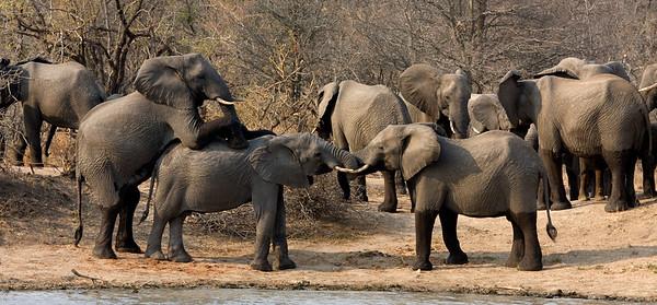 Playtime for Elelphants