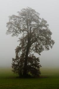 Trees 0007