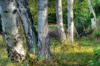 Trees 0003