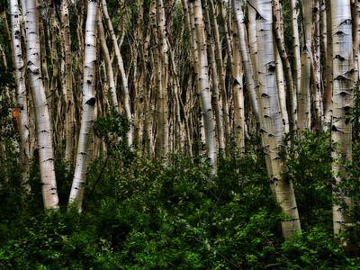 Trees 0005