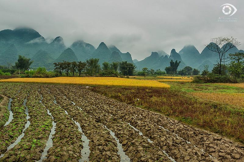 Rice farms, Yangshuo, Guangxi, China