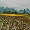 Rice farms, Yangshuo, Guangxi, China