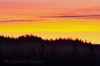 SunSet boreal Forest