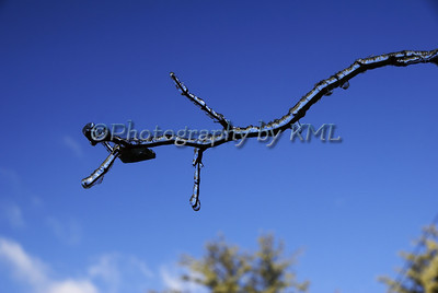 a branch covered in ice against a blue sky
