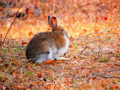A Spring Hare, 2020