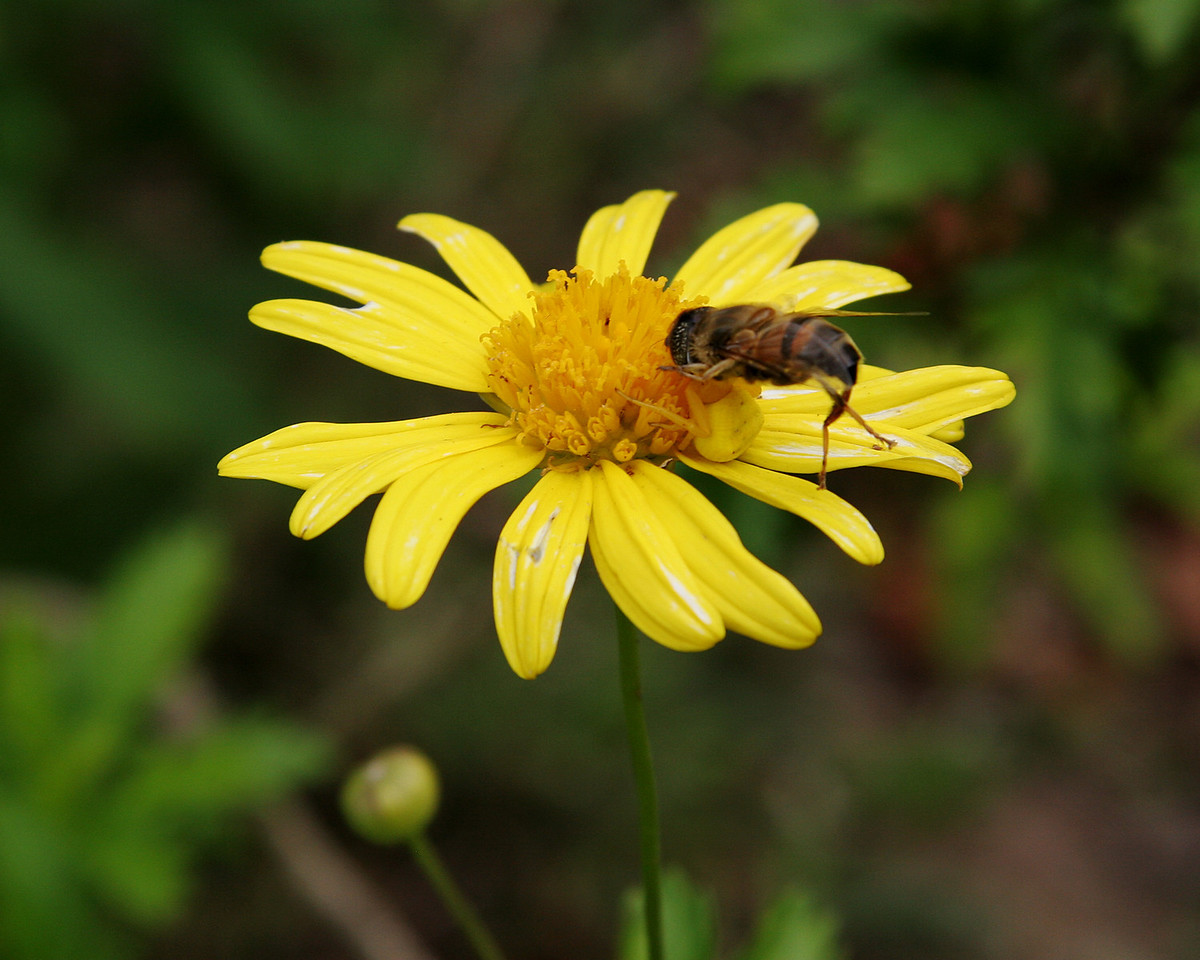 Bee's Last Flower