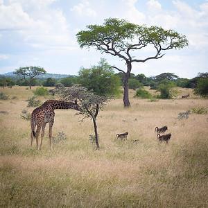 Sharing the Serengetti