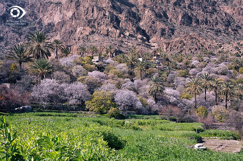 فصل الربيع في قرية وكان من وادي مستل