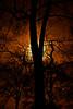153 Trees In Back Yard 4 (nik photo styler copper)
