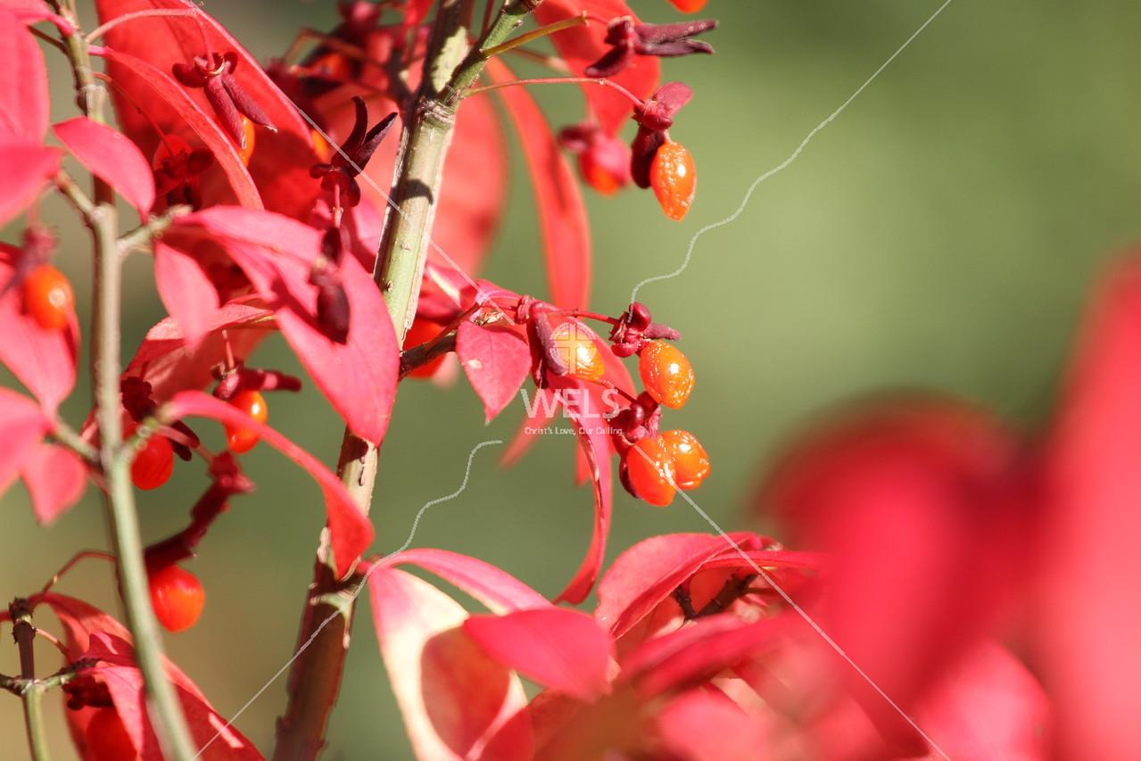Hanging onto Autumn by pthiele