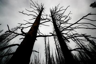 Trees 0011