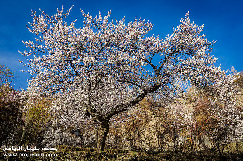 Spring in North Pakistan.