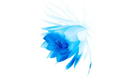 Night Blooming Cereus Blue #2 20100820-20100820_MG_0017-2