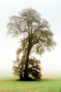 Trees 0021