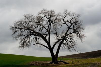 Trees 0022