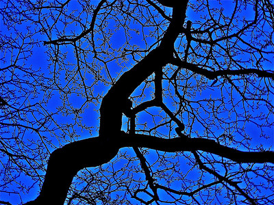 Tree with no leaves in the Boston Public Garden.