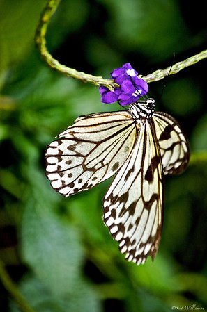 Butterfly Enjoying Some Lunch