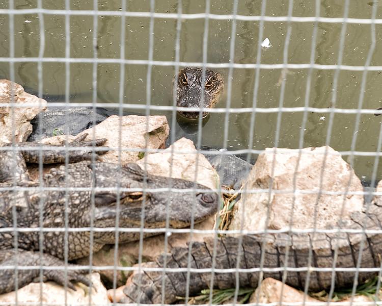26 Big Joel's Safari Petting Zoo Sept 2019