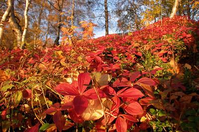Høstfarger (© Ragnar Våga Pedersen)