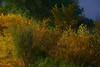 2007 Colorado Trip - Cherry Creek Brush (time expose 13sec)
