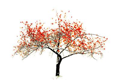 Trees 0016