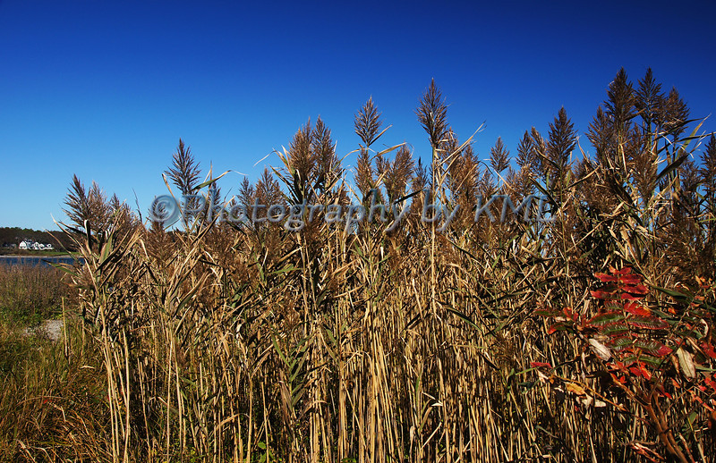 Tall Grass in the Autumn