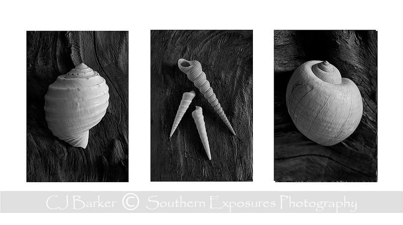 seashell triptych