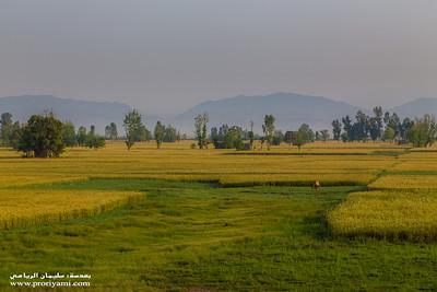 "Punjab Plains, Sialkot ""Pakistan"""