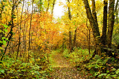 Hiking Trail, Autumn 2018