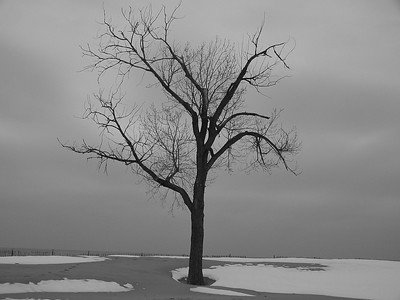 Lake Mich Tree 06 (B&W)