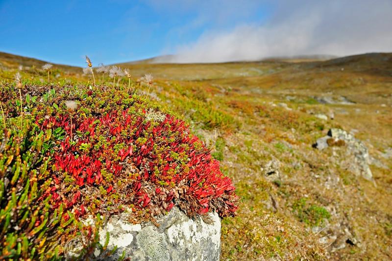 Autumn color in Abisko national park in Sweden