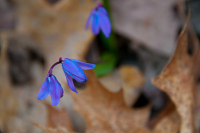 First flowers of spring at Hartwood Acres.