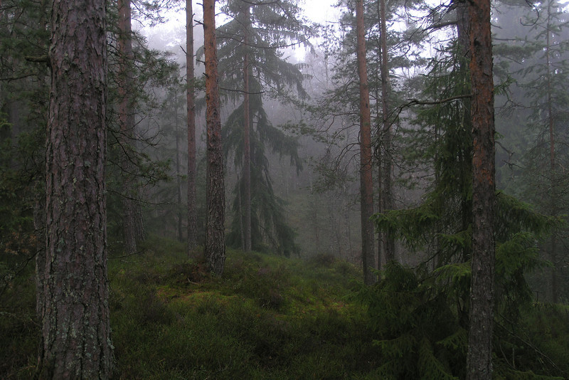 Skog (© Ragnar Våga Pedersen)