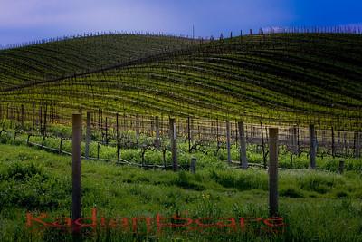 Undulating Vines